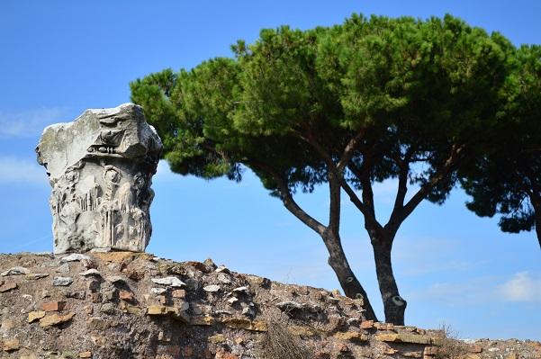 Palatine-Pine-Rome