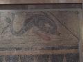 Dolphin-Mosaic-Aquincum