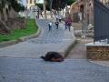 Beggar In The Forum